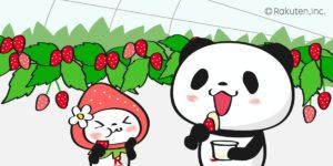 いちご狩りをする買い物パンダ